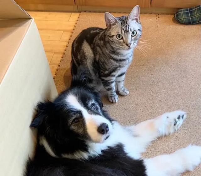 犬・リクくんとその隣にいる猫・ソラくんが、飼い主を見上げているようす