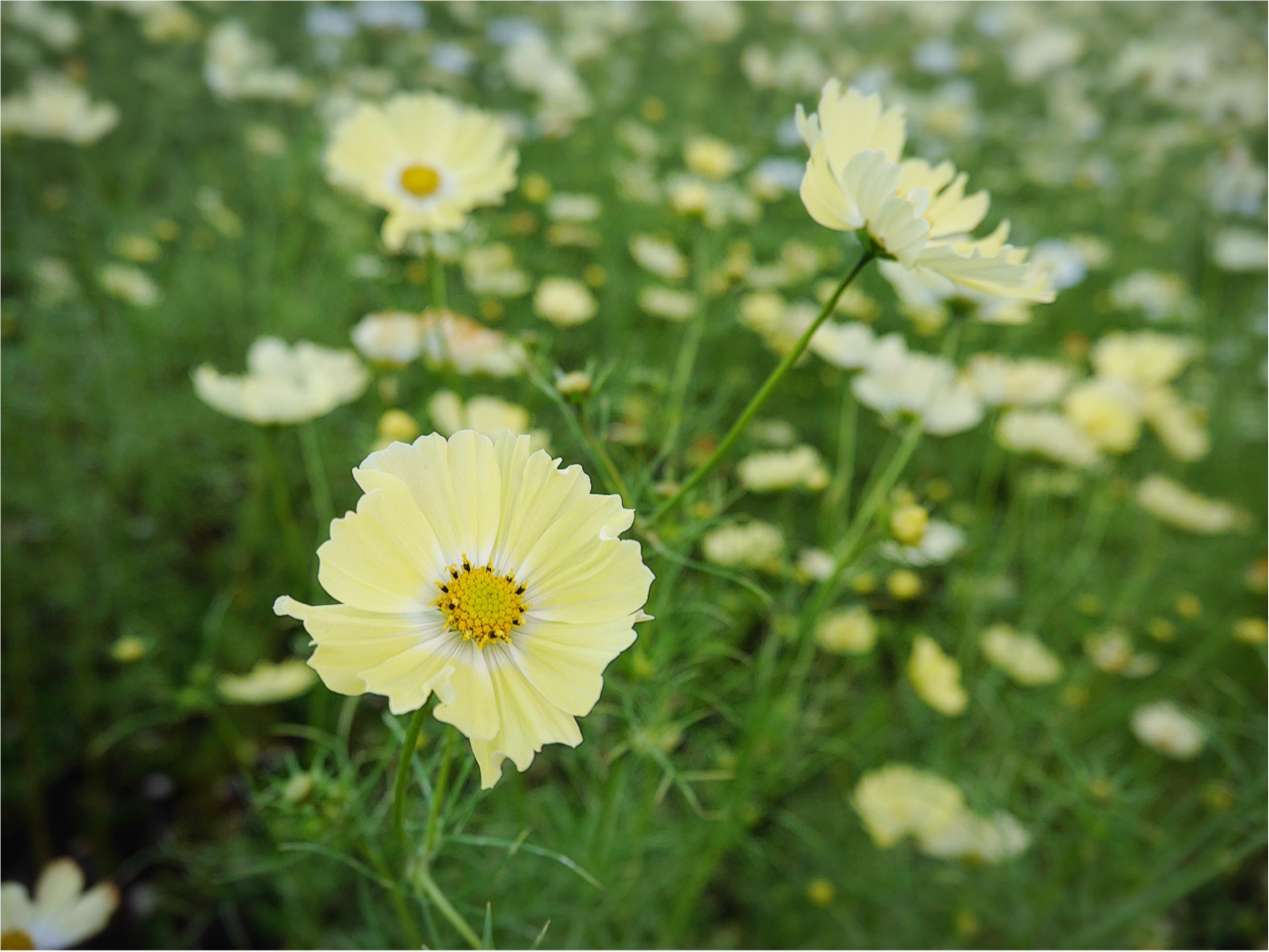 ★晴れた日は、カメラを持って昭和記念公園へ☺︎my camera は『LUMIX』!!_6