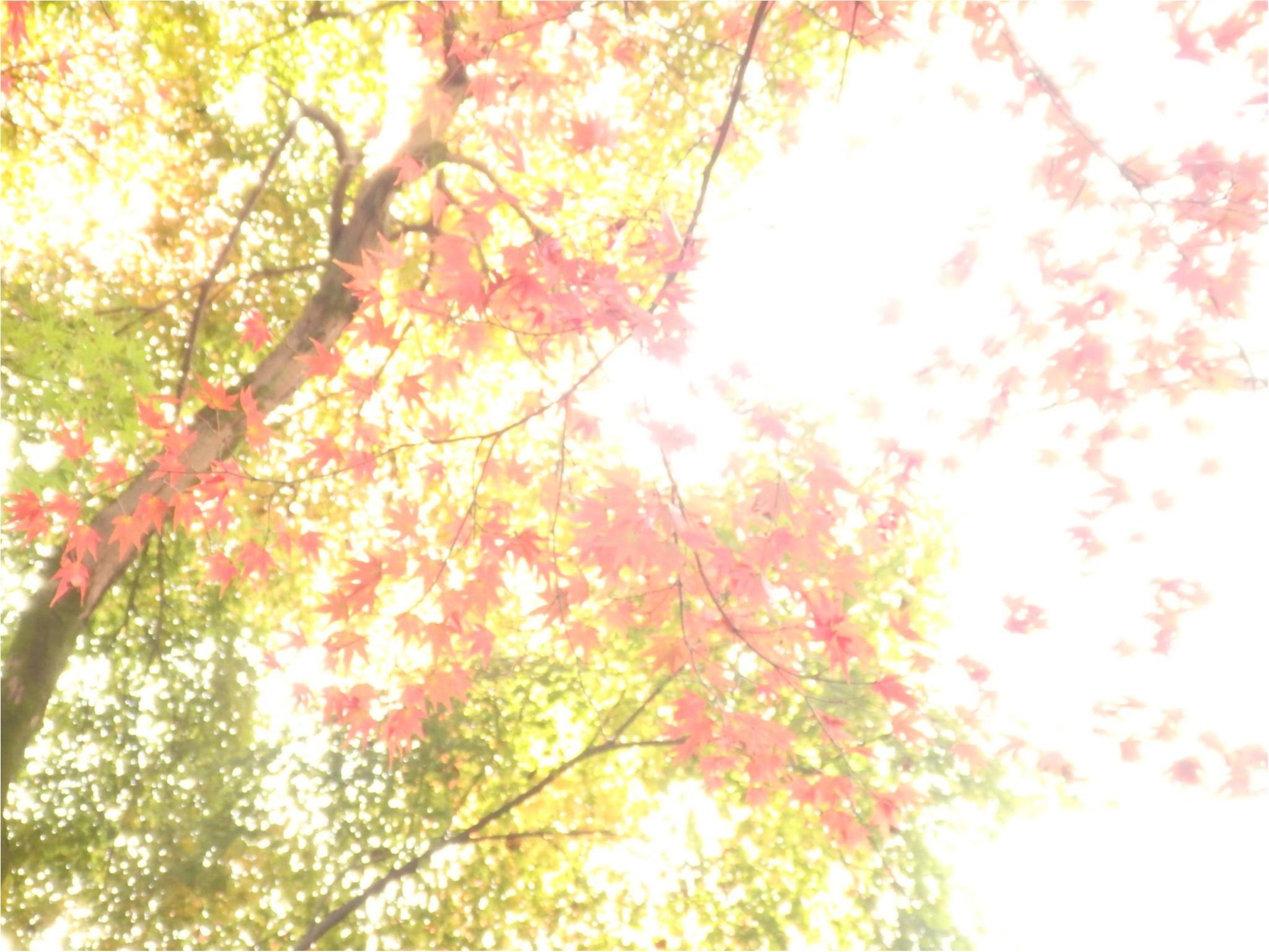【イケメン地蔵】話題の岐阜で秋を満喫♪_6