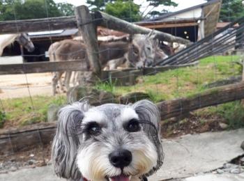 【今日のわんこ】サクラちゃん、動物園で記念撮影♪