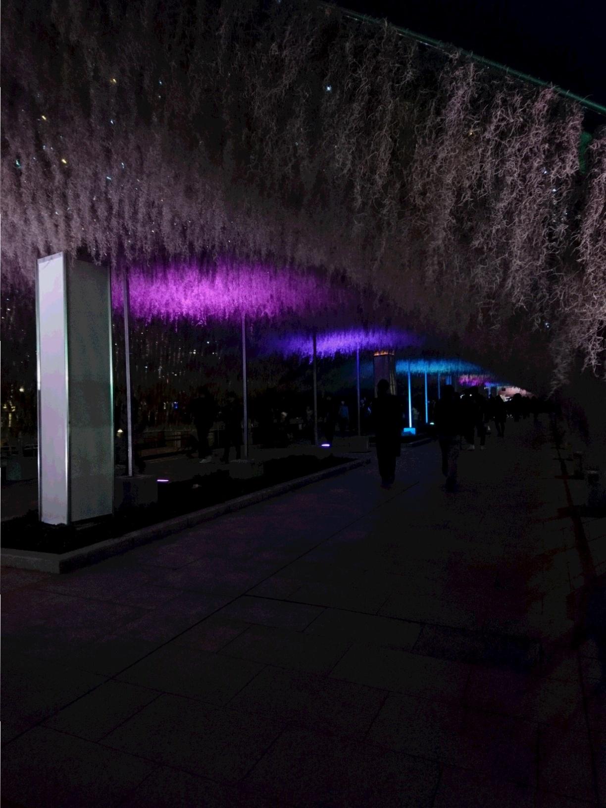 兵庫県は今、神戸がホットスポット☆ 開港150周年&世界一のクリスマスツリー ☆_3