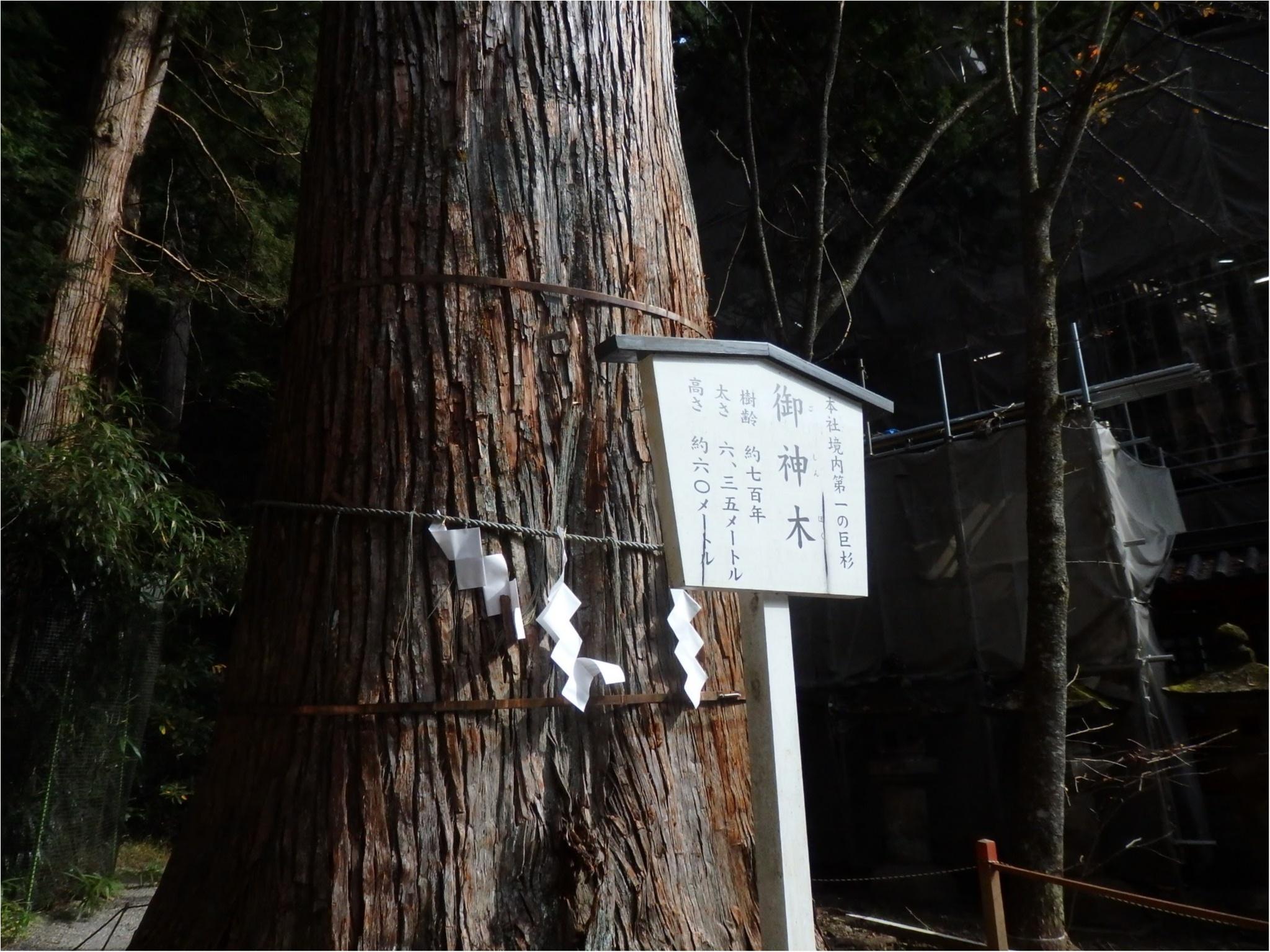 【知らなかった!】日本一楽しめる神社へ潜入してみた_27