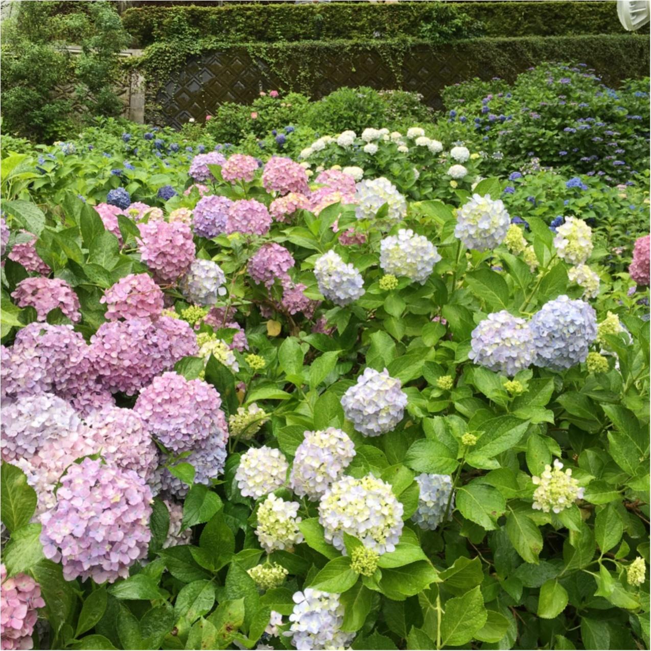梅雨の時期に見たい♪紫陽花の名所へおでかけ…*見つけたハートの紫陽花♡_3