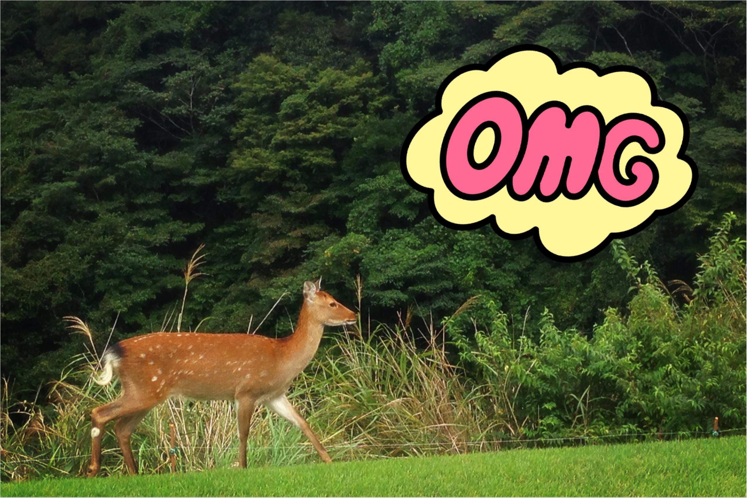 【GOLF】ゴルフでファッションを楽しむ♡秋晴れの中ラウンドしてきました!_6