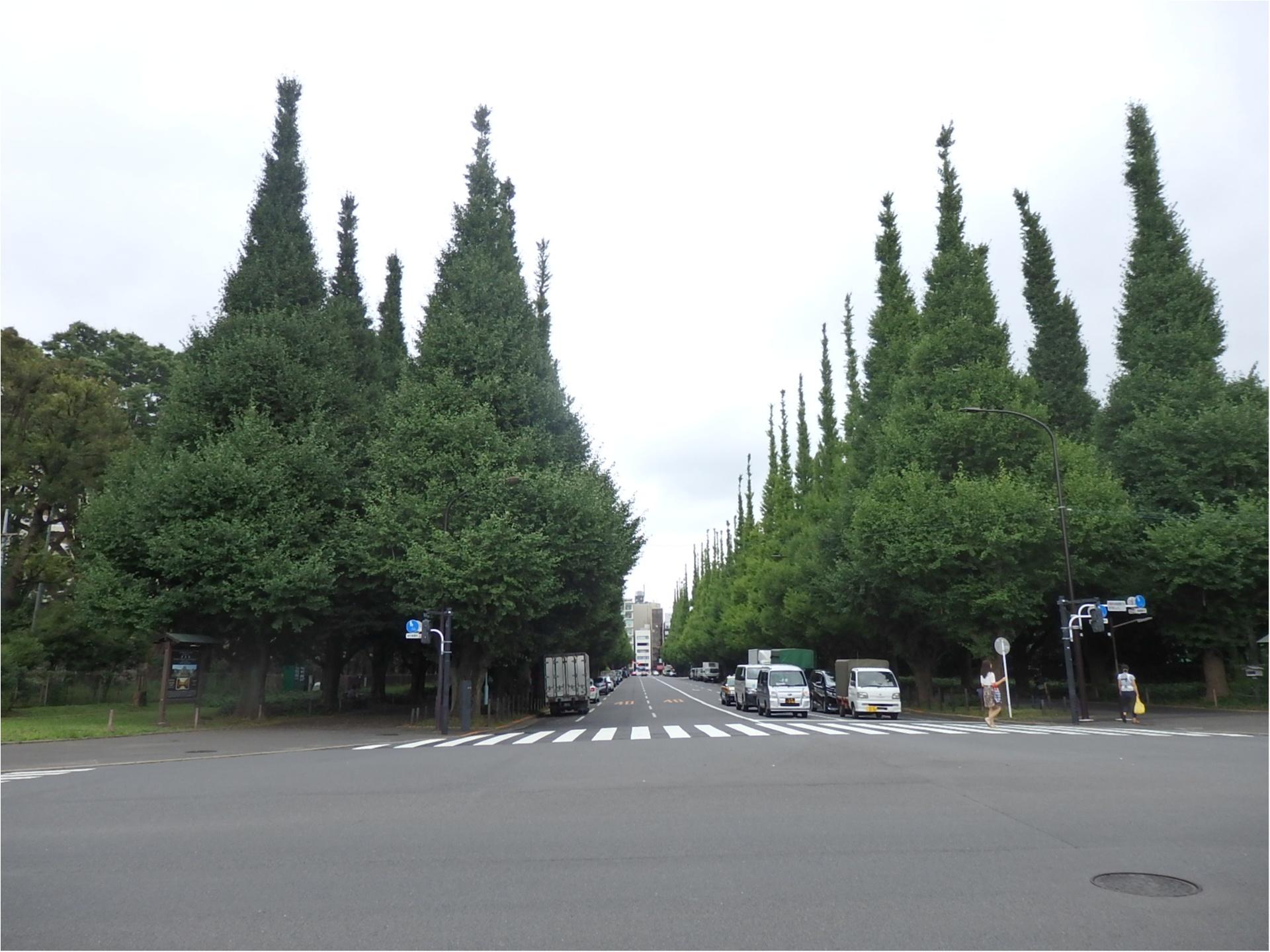 東京が小さく感じられる!ロードバイクならすいすい♪練習のお楽しみは築地で海鮮♥ #ツール・ド・東北【#モアチャレ あかね】_7