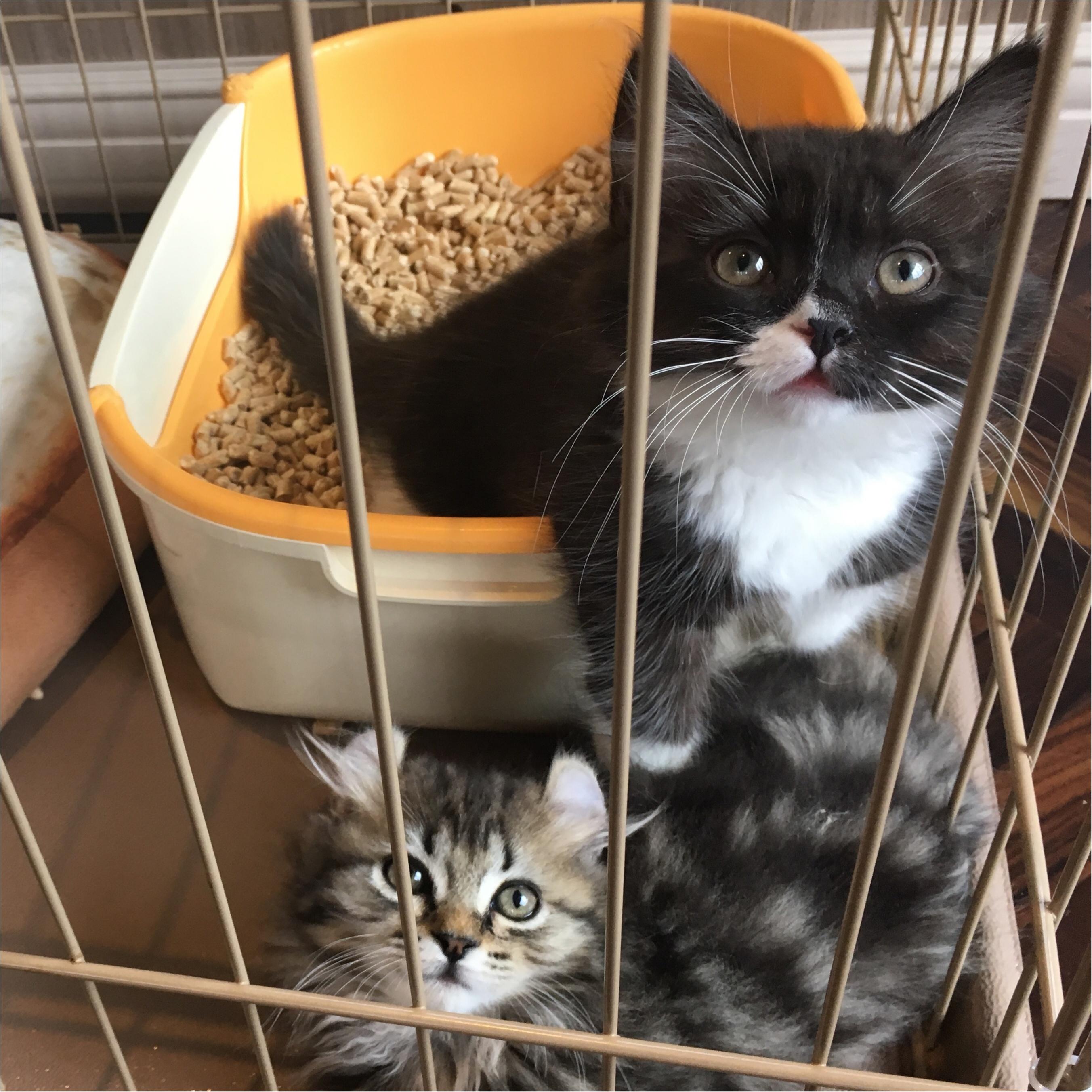 【猫カフェ】渋谷で癒しの猫カフェ♡今ならカワイイ子猫にも会えちゃう♪_11