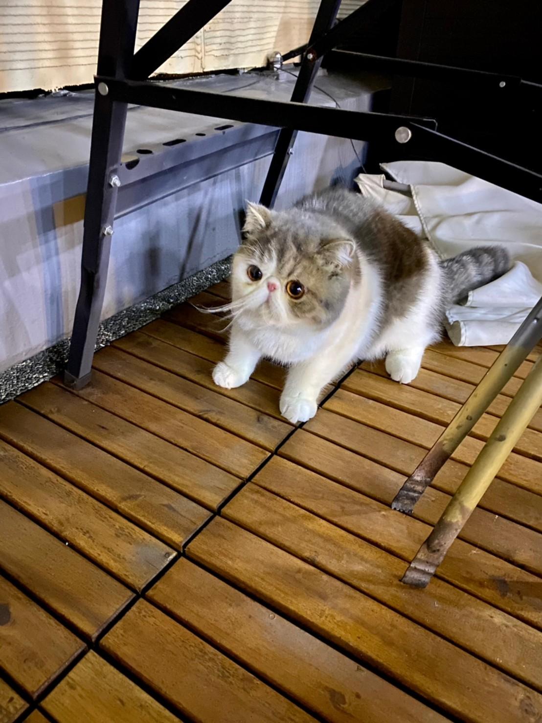 飼い主の行動にビビり固まる猫・こたつくん