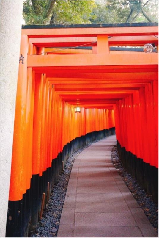 初詣人気ランキングでNO.1‼︎全国で3万社を超える稲荷神社の総本宮で今年の初詣♪_2