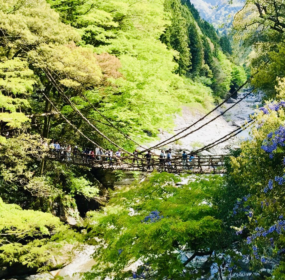 【女子旅におすすめ】徳島県に来たら外せない!癒しの絶景スポット《祖谷のかずら橋》★_4