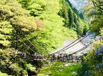 【女子旅におすすめ】徳島県に来たら外せない!癒しの絶景スポット《祖谷のかずら橋》★