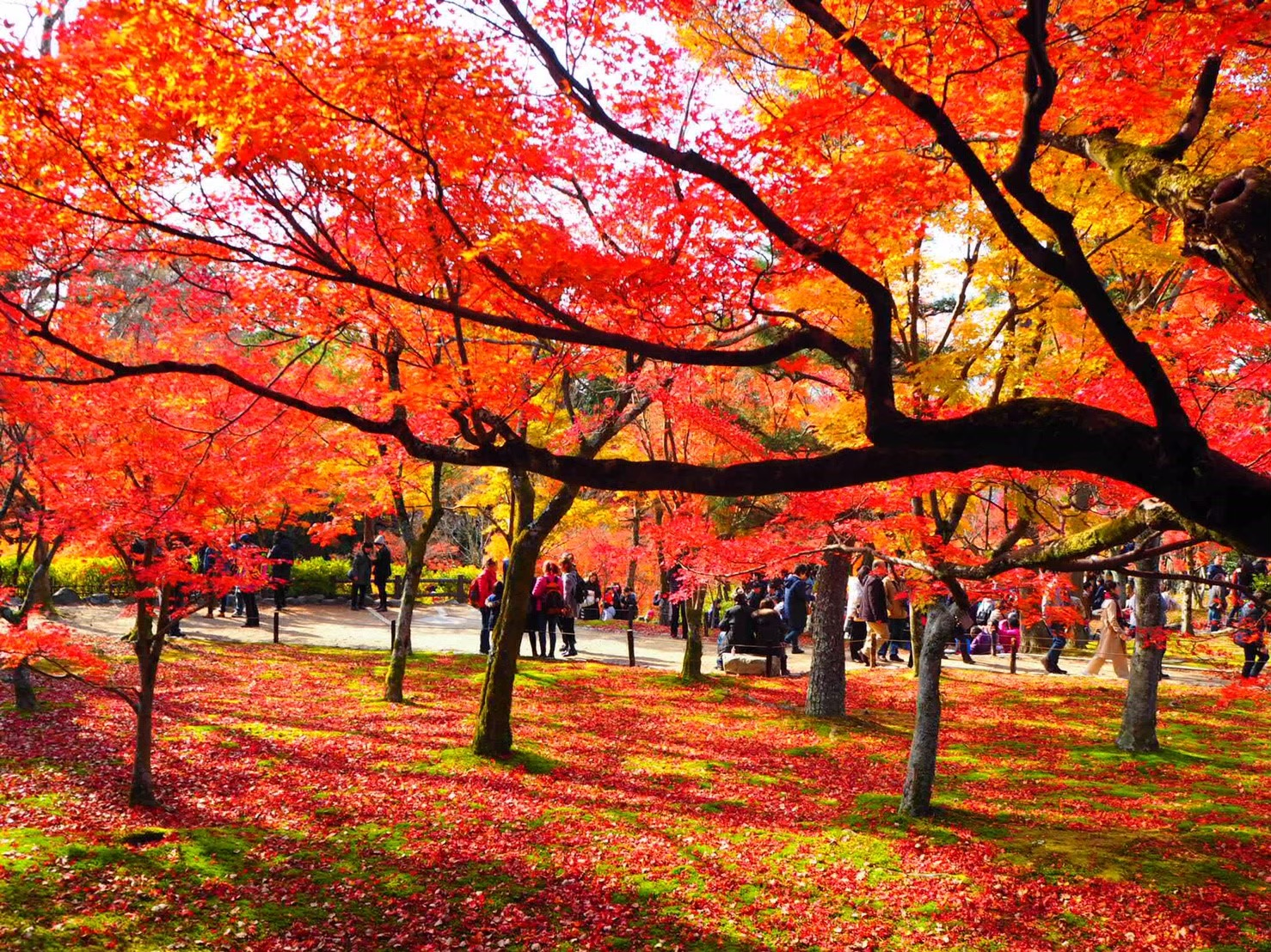 【女子旅におすすめ】京都で体験して最高だったベストメモリーまとめ♡_14