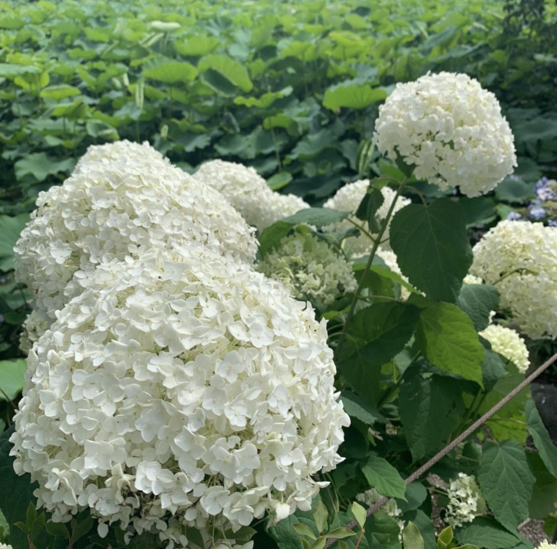 【梅雨も楽しめる♪】上野をお散歩してみませんか?☺︎_2