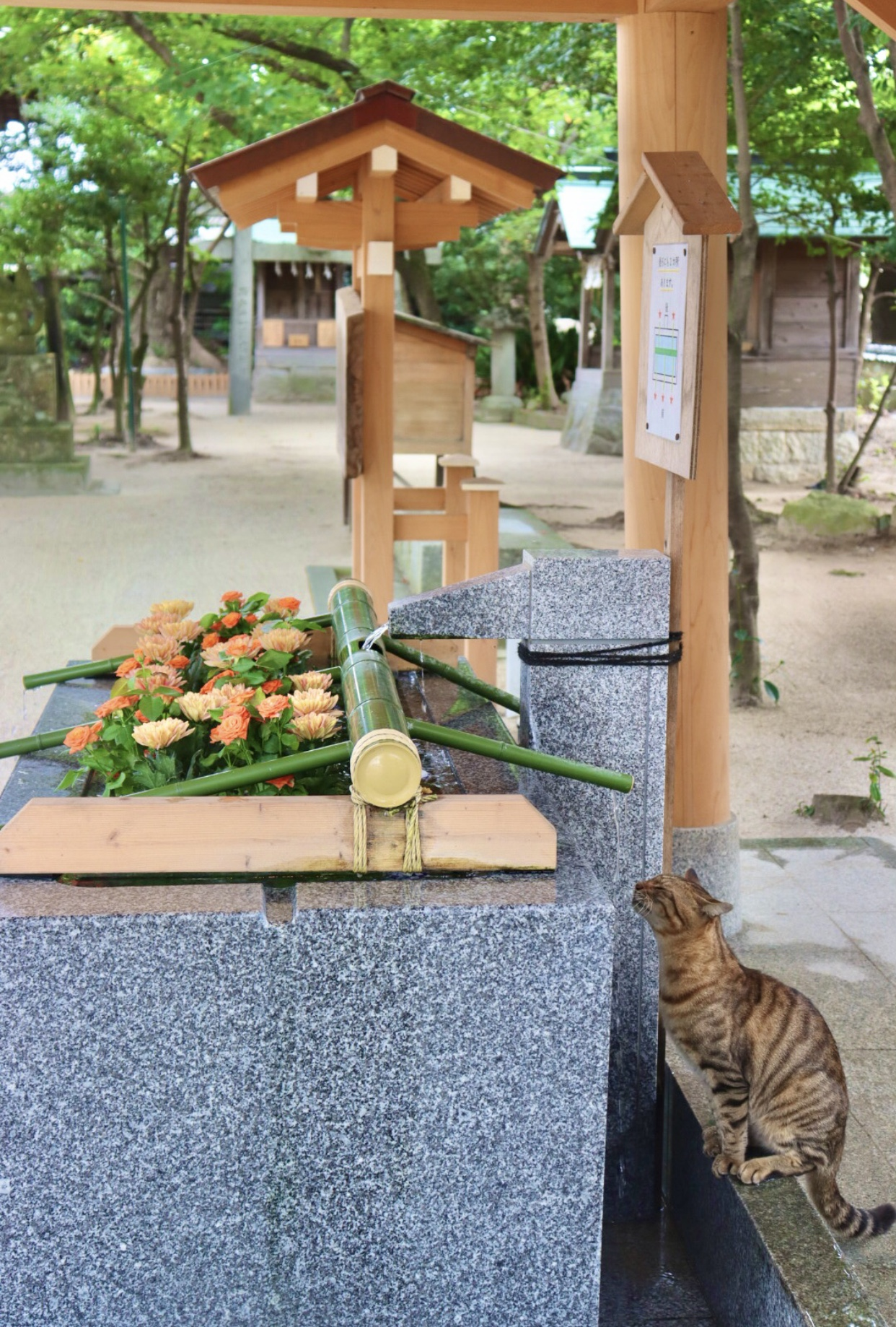 【女子旅にオススメ】今いくべき可愛すぎる福岡の神社3選_5
