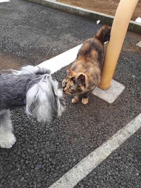 近所の猫となかよくお話しているサクラちゃん。