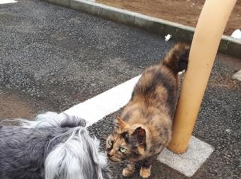 【今日のわんこ】サクラちゃん、野良猫と仲良くなる!?