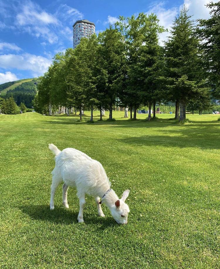 北海道旅行は星野リゾートトマムで夢のひとときを_5
