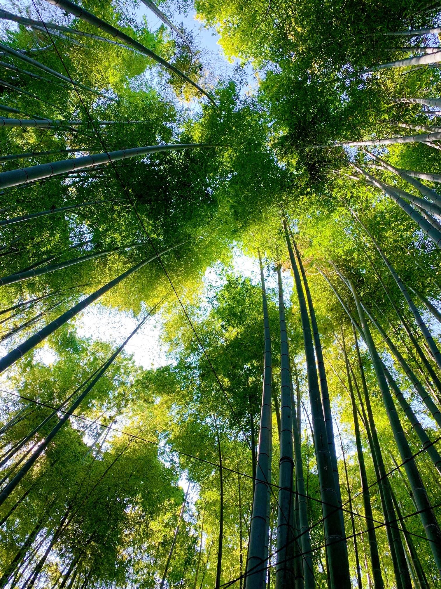 【女子旅におすすめ】神奈川《鎌倉》静かに自然を感じる癒しスポット4選♡_3
