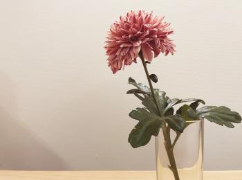 【おうち時間】お部屋に花を取り入れて癒し空間に♡