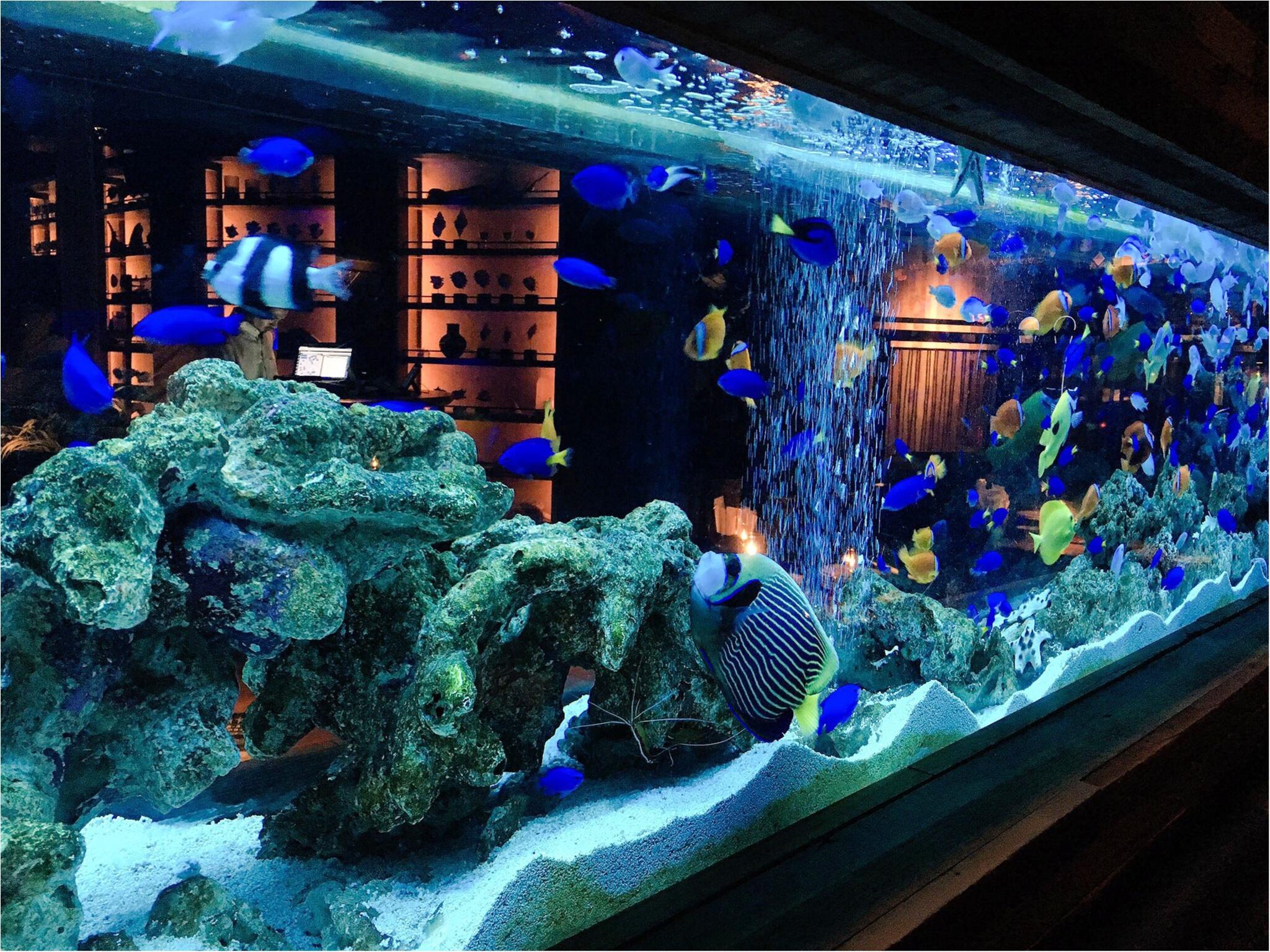 水族館…?いえいえここはダイニングバーなんです(﹡´◡`﹡ )♡新宿『LIME』に行ってきました!_1