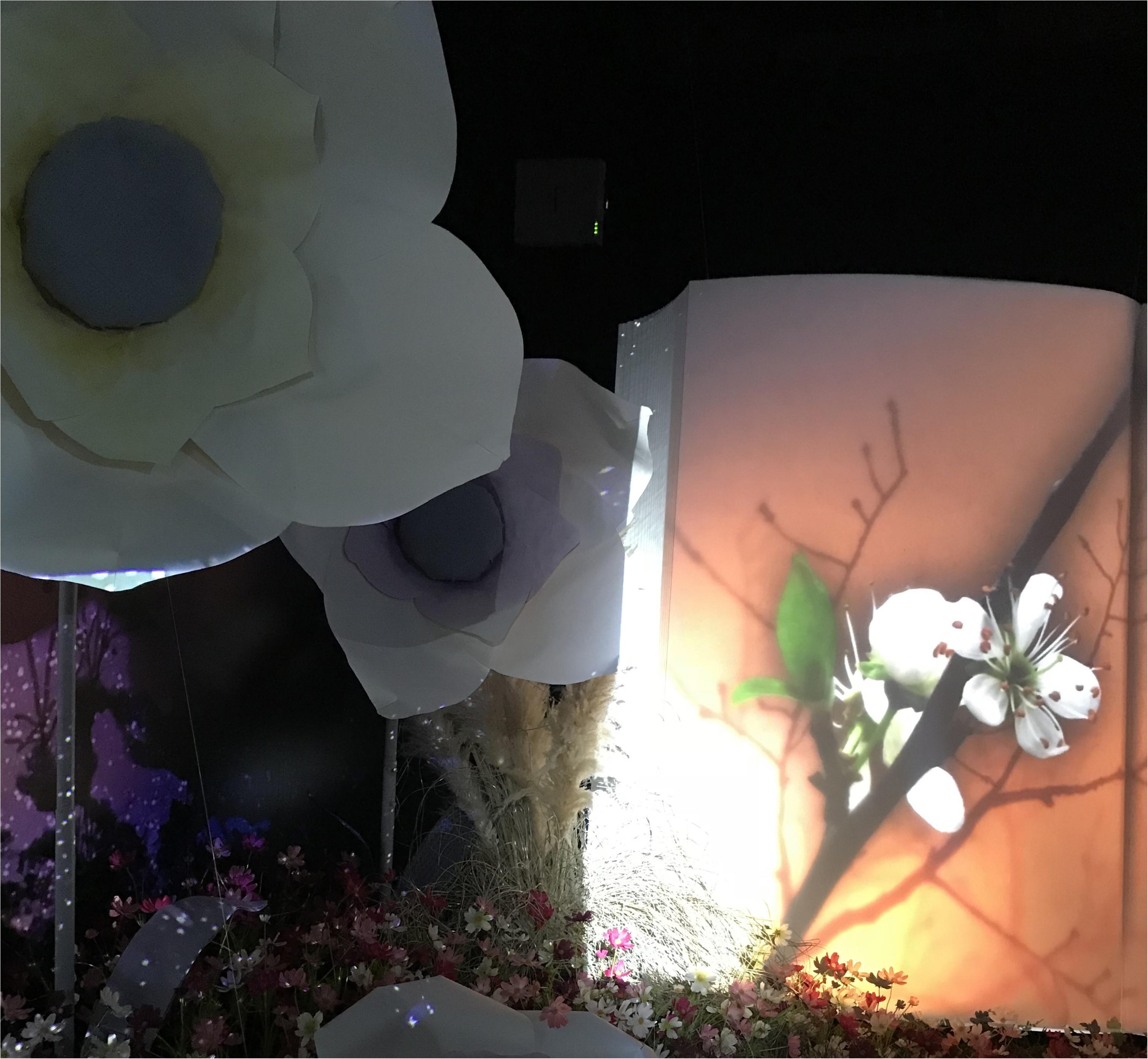 【Flower by NAKED】生花と映像のコラボ♡ フォトジェニックな秋に咲く桜を見てきました♡_2