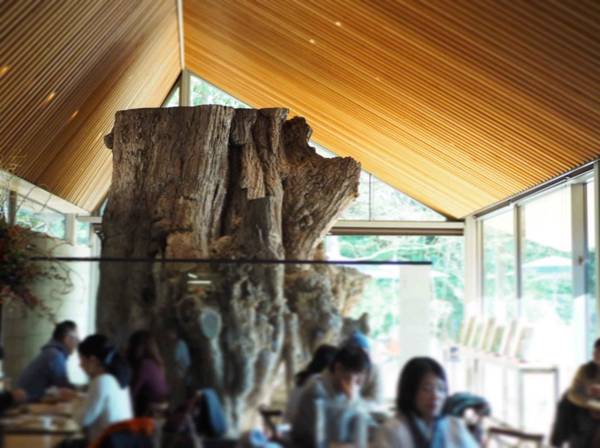 【#秋の鎌倉さんぽ】紅葉の鶴ヶ丘八幡宮♡ あの銀杏に会えるカフェ。_7