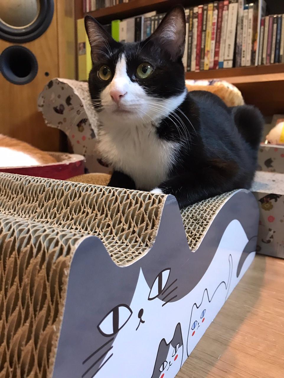 【今日のにゃんこ】猫 on the 猫。なルウくん★_1