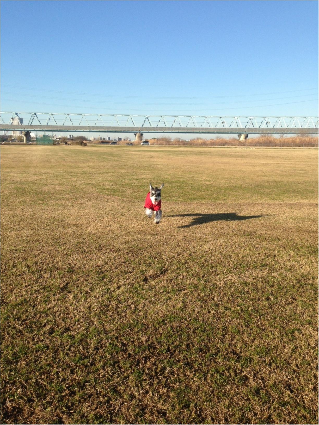【今日のわんこ】青空最高! サクラちゃんはお散歩日和を満喫中♡_1