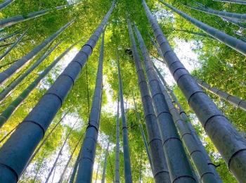 【女子旅におすすめ】神奈川《鎌倉》静かに自然を感じる癒しスポット4選♡