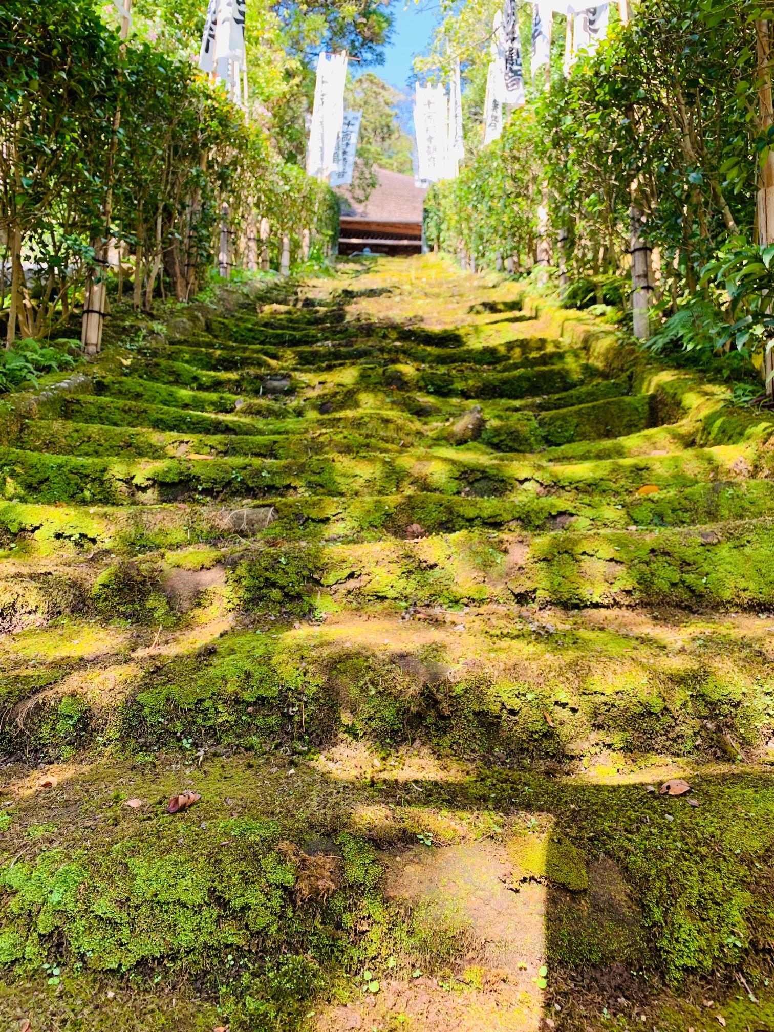 【女子旅におすすめ】神奈川《鎌倉》静かに自然を感じる癒しスポット4選♡_5