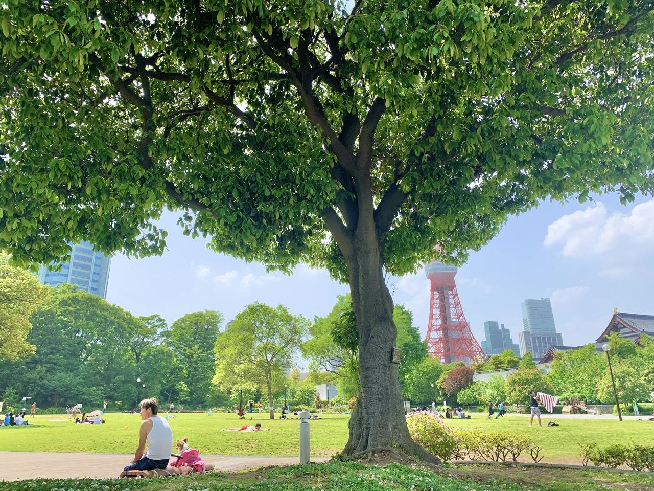 ♡芝公園 バラ園♡_3