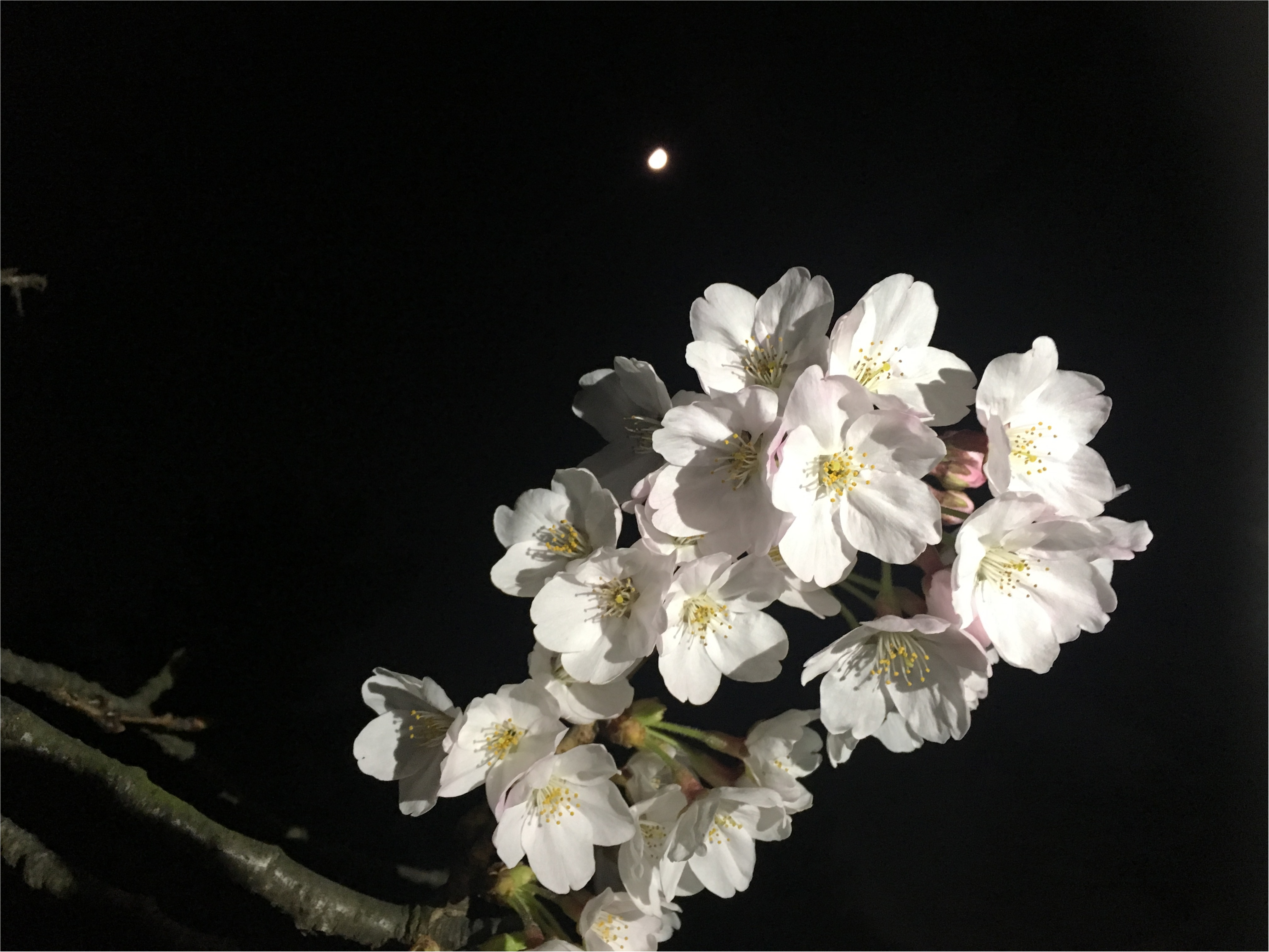 ★adidasのスニーカーを使って昼のお花見コーデと夜のお花見コーデ★_4