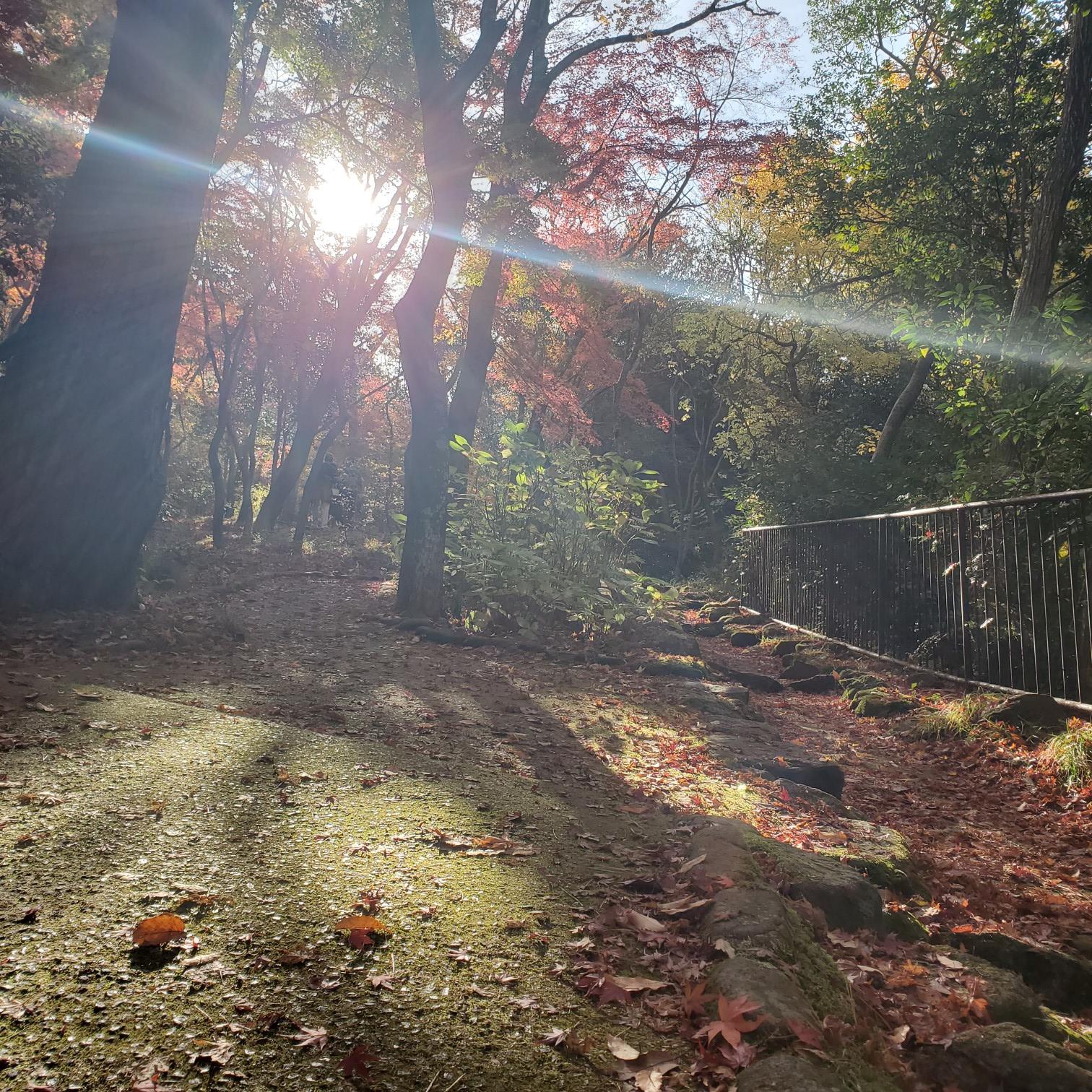 【女子旅におすすめ】兵庫県 紅葉と食べ歩き・温泉を楽しめる有馬温泉街☆_2