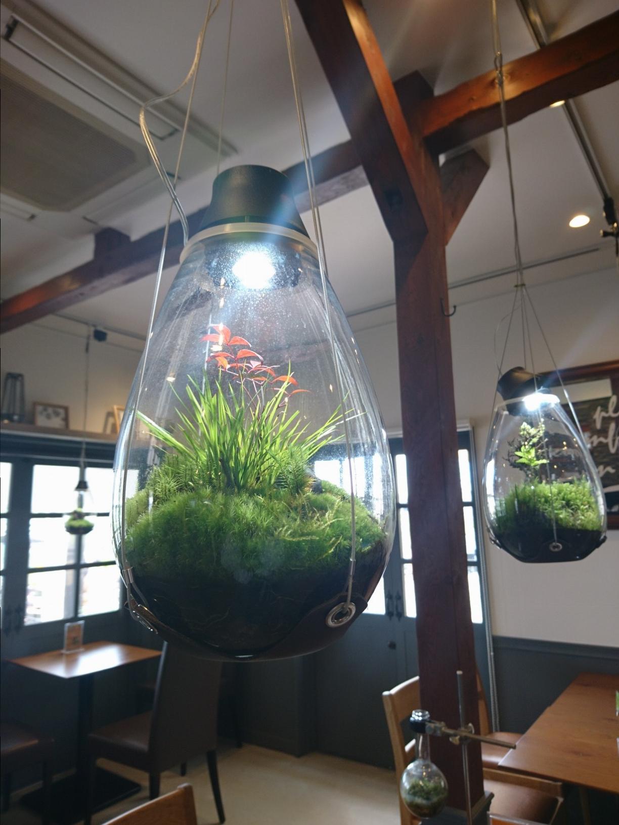 ≪兵庫県・宝塚≫花と緑に囲まれた癒し空間カフェ_2