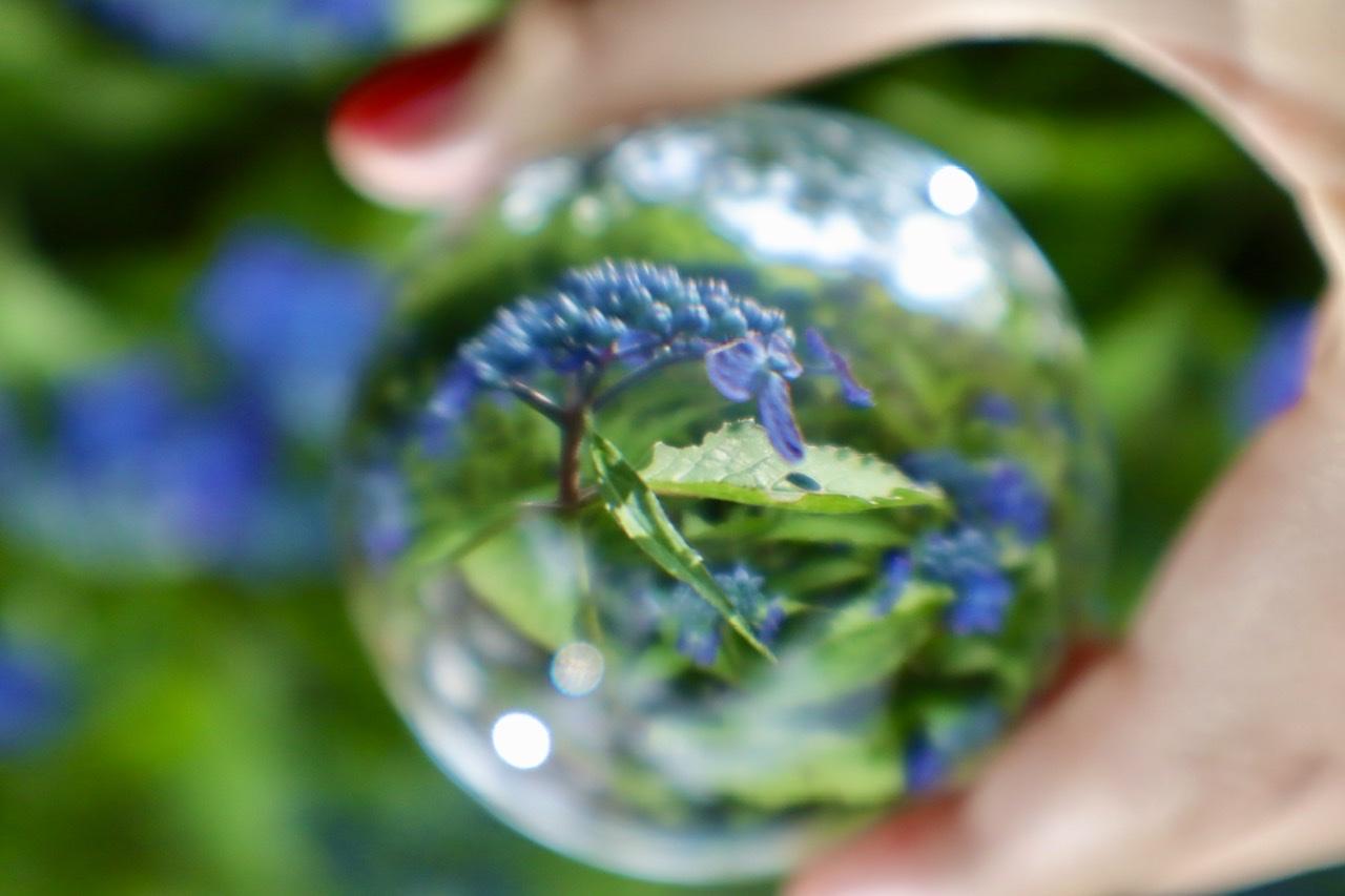 ガラス玉に映った紫陽花の写真