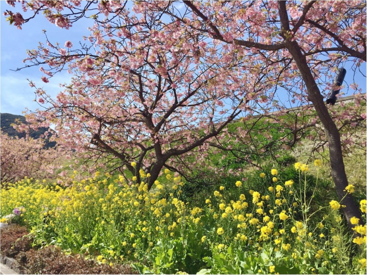 春の訪れを感じに…『河津桜まつり』へ行ってきました♡*_2