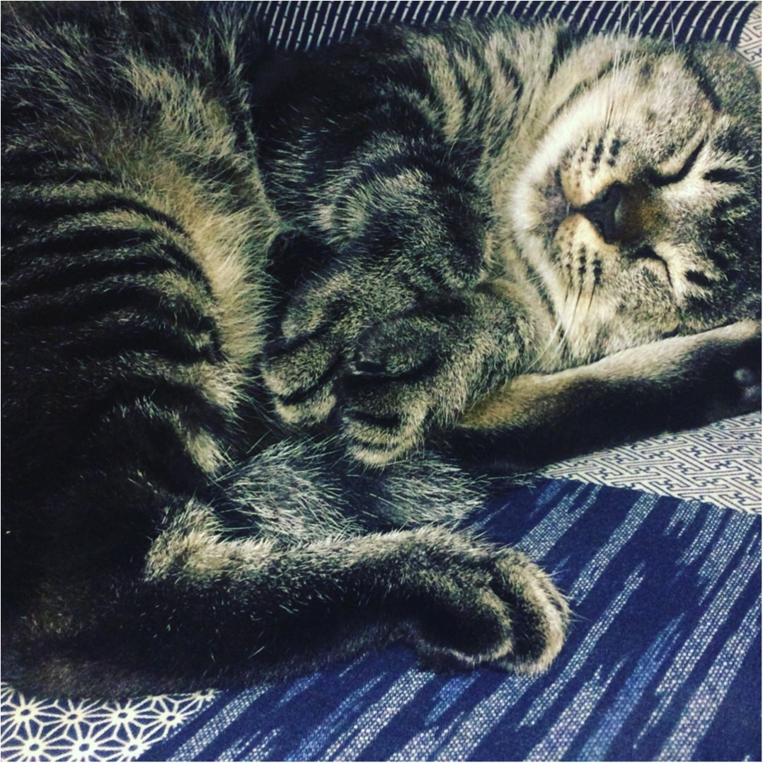 今日は世界猫の日♡_1