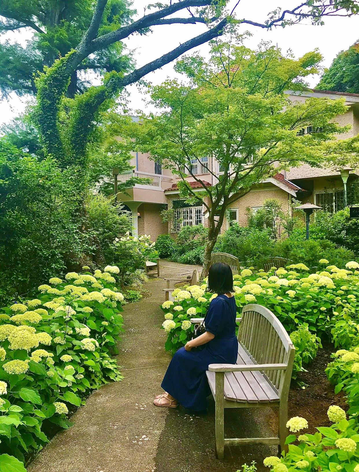 【デートにも女子旅にもおすすめ】 白いあじさい畑×静かな茶室でのティータイム _3