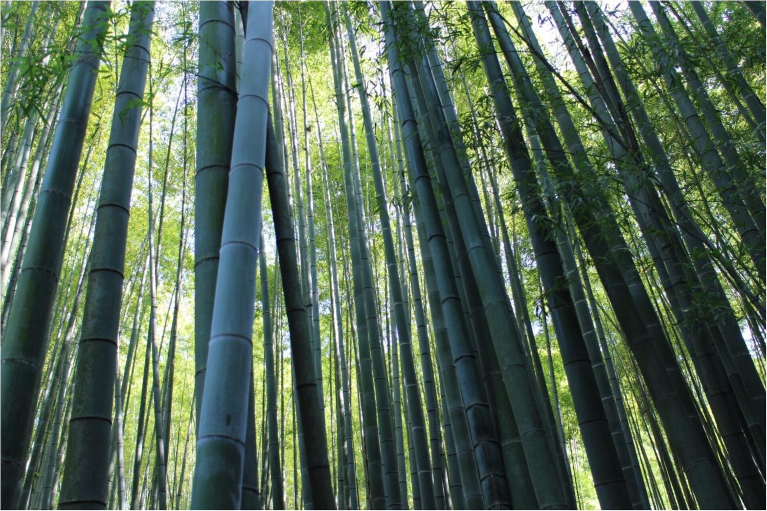 【鎌倉】着物で行きたいスポットNo.1♡フォトジェニックすぎる「報国寺」散策!_2