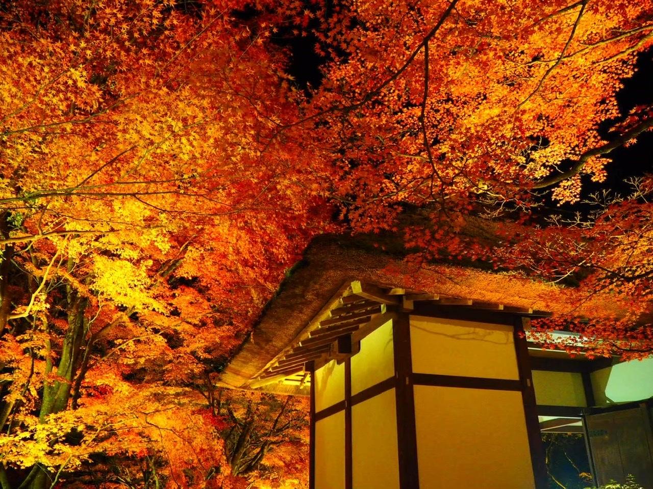 【女子旅におすすめ】京都で体験して最高だったベストメモリーまとめ♡_17