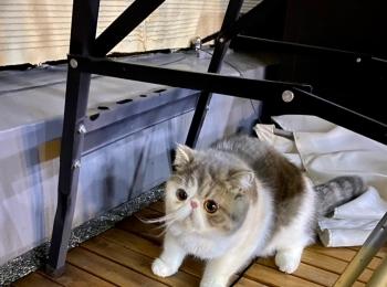 【今日のにゃんこ】 屋上でフリーズした、こたつくん