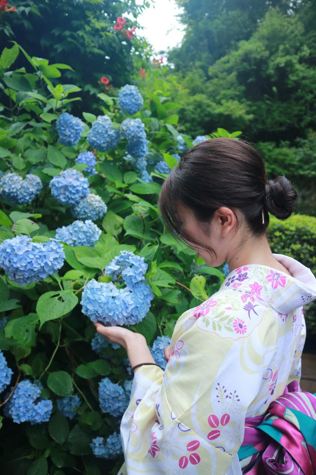 夏着物で鎌倉女子旅♡  紫陽花がとっても綺麗でした♡_1