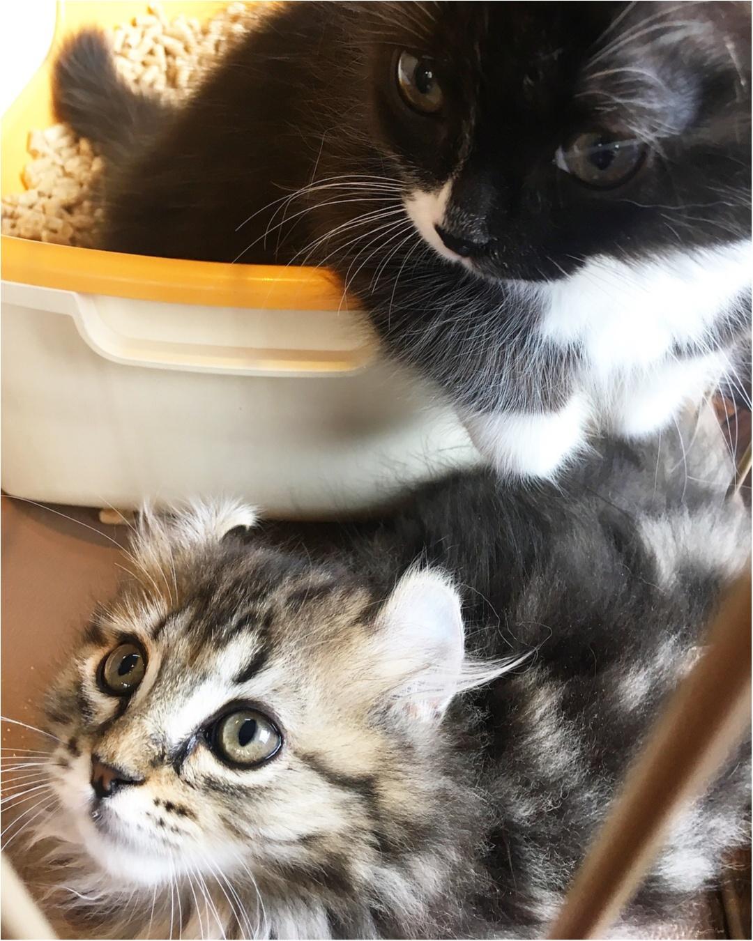 【猫カフェ】渋谷で癒しの猫カフェ♡今ならカワイイ子猫にも会えちゃう♪_1