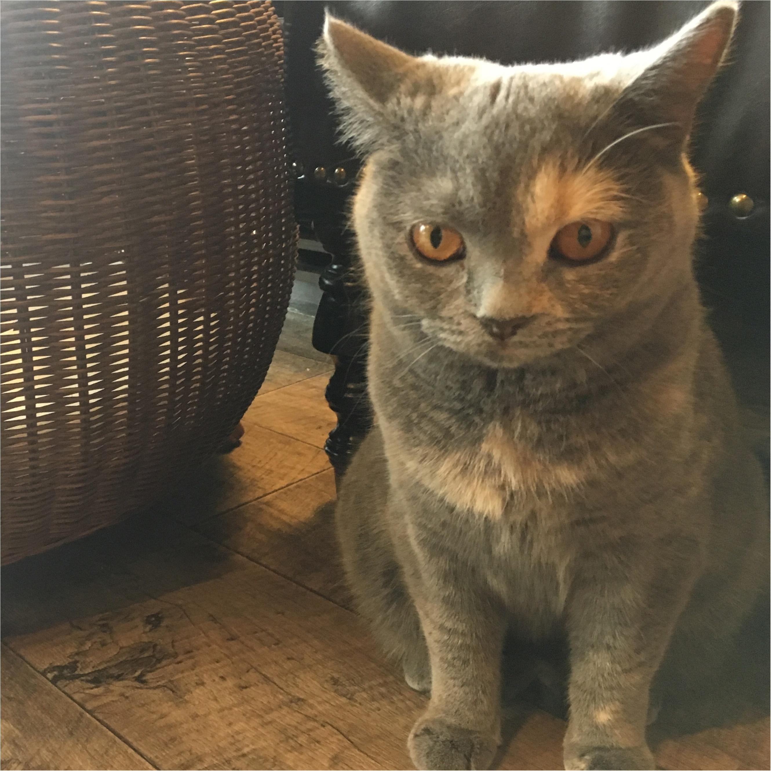 【猫カフェ】渋谷で癒しの猫カフェ♡今ならカワイイ子猫にも会えちゃう♪_15