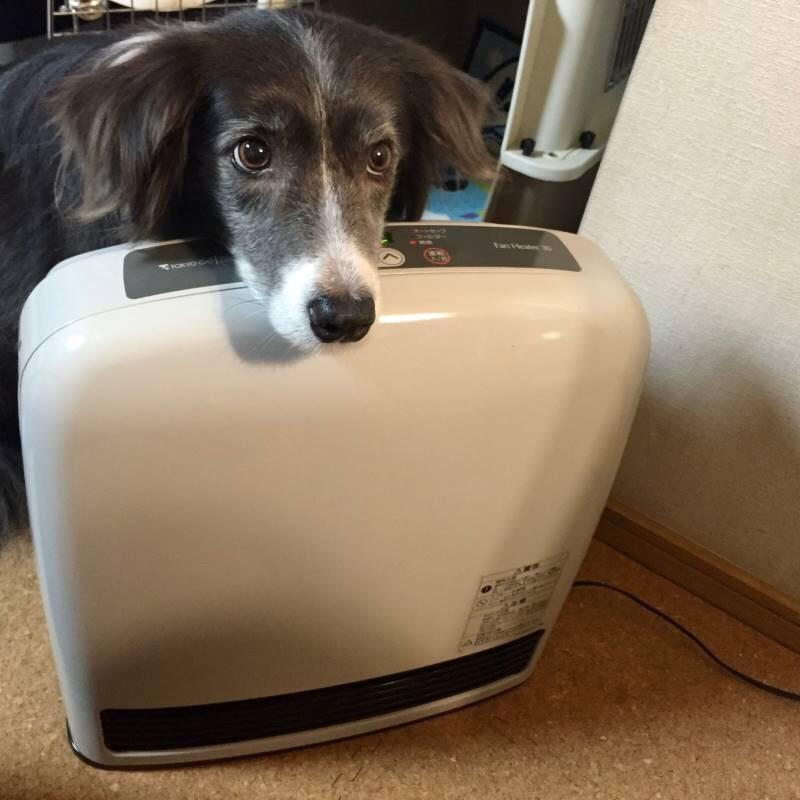 1年ぶりの暖房器具にるんるんのメルちゃん