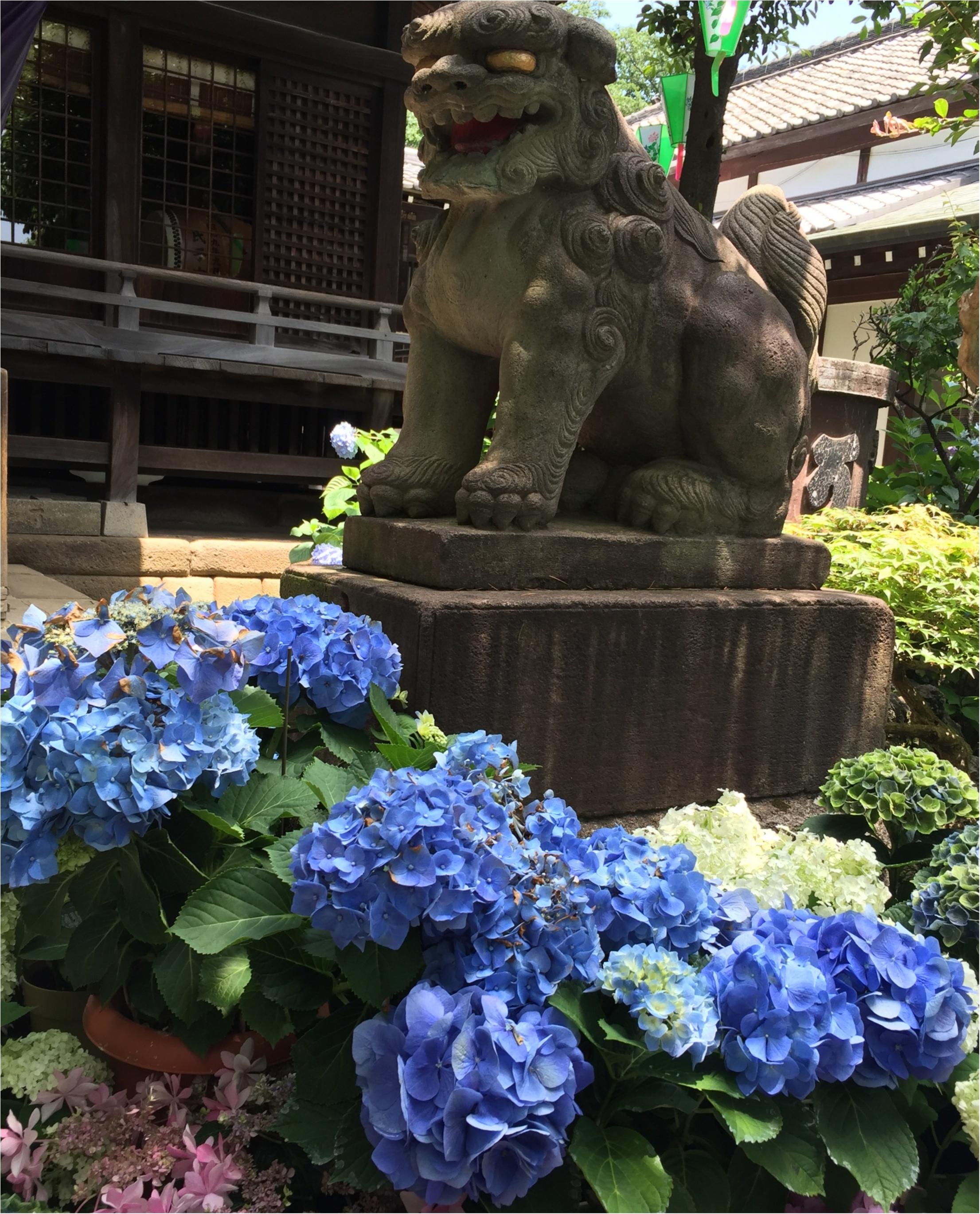 【今が見頃!】6月のおでかけは紫陽花まつりがおすすめ*写真映えするコーデのポイントも♡_3
