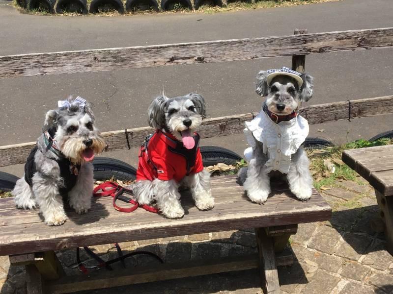犬・サクラちゃん、姉妹犬とのスリーショット