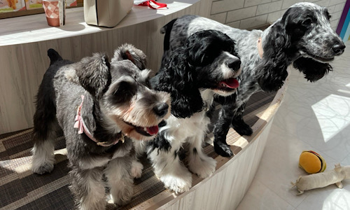 3匹の犬の写真