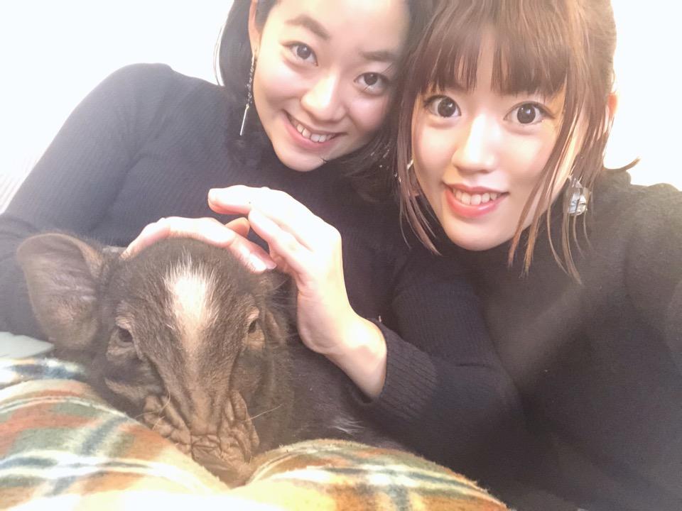 可愛すぎるマイクロブタちゃん♡動物カフェで1番のおすすめ!その魅力お伝えします☺︎!_6