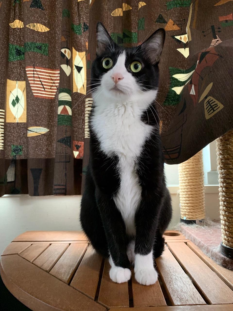 自宅でピンポンの音にビックリする猫・ルウくん