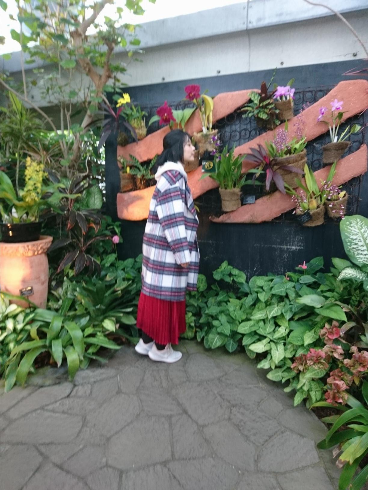 クリスマスシーズンに家族&カップルにお勧め!植物と光に彩られた奇跡の植物館_2